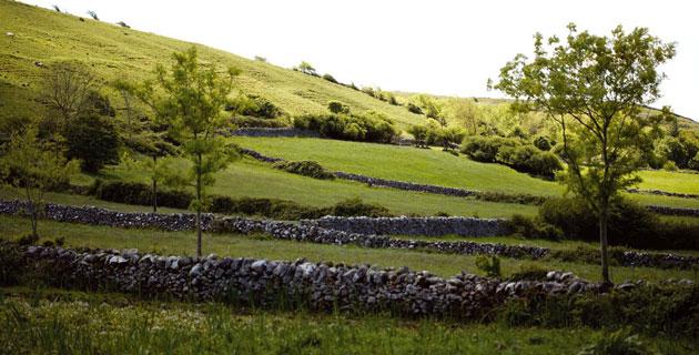 blog-ely-farm-2