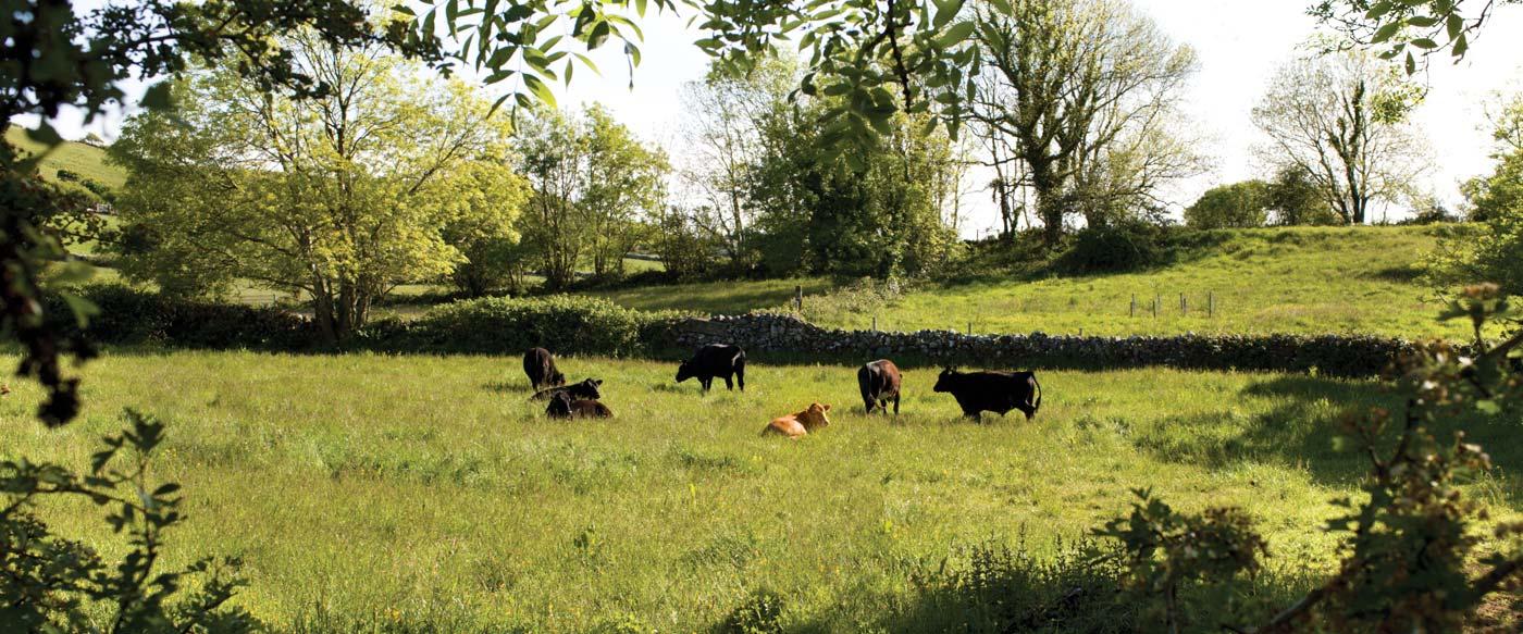 The ely family farm